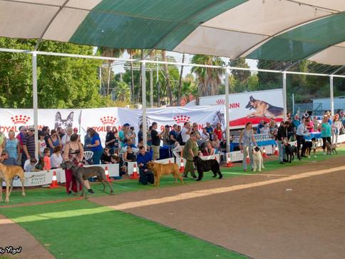 סיקור התערוכה הבינלאומית - צמח 2017 - שופטת דר' צפרא סיריק, ישראל