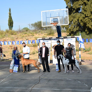 סיקור תערוכת הסתיו - אביחיל 2020 - יוחאי ברק-ליפק, ישראל