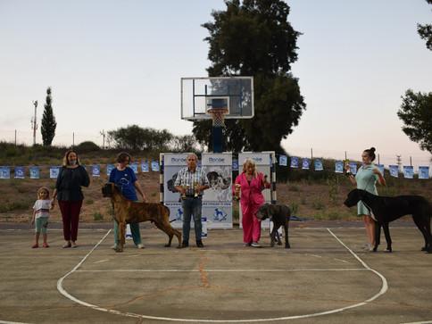 סיקור תערוכת פוסט קורונה - אביחיל 2020 - יוסי גיא, ישראל