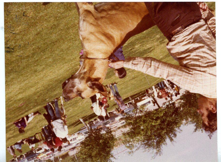 Show 1981-003
