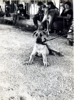 Show Kfar Truman 1979 - 001