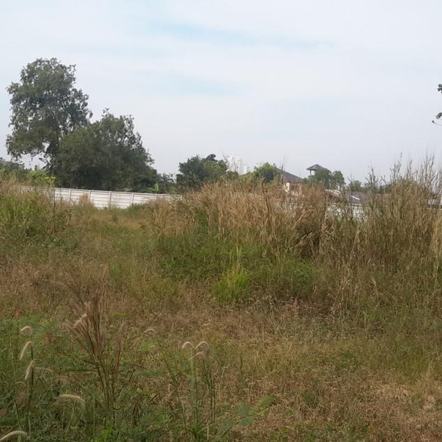 2 Rai Land for Sale (8).jpg