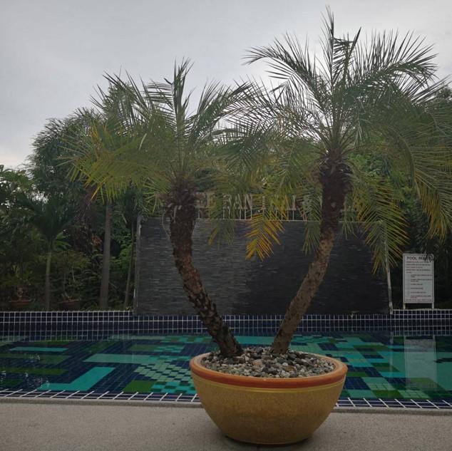 Resort (4).jpg