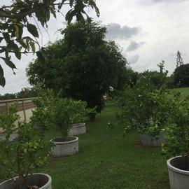 4 Rai Plus Tropical GardenRestaurant (10