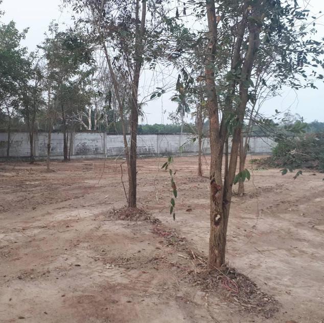 3.5 Rai Land Plot (11).jpg