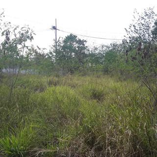 Lake Mabprachan 1 Rai of Land (17).jpg