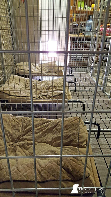Kennel beds