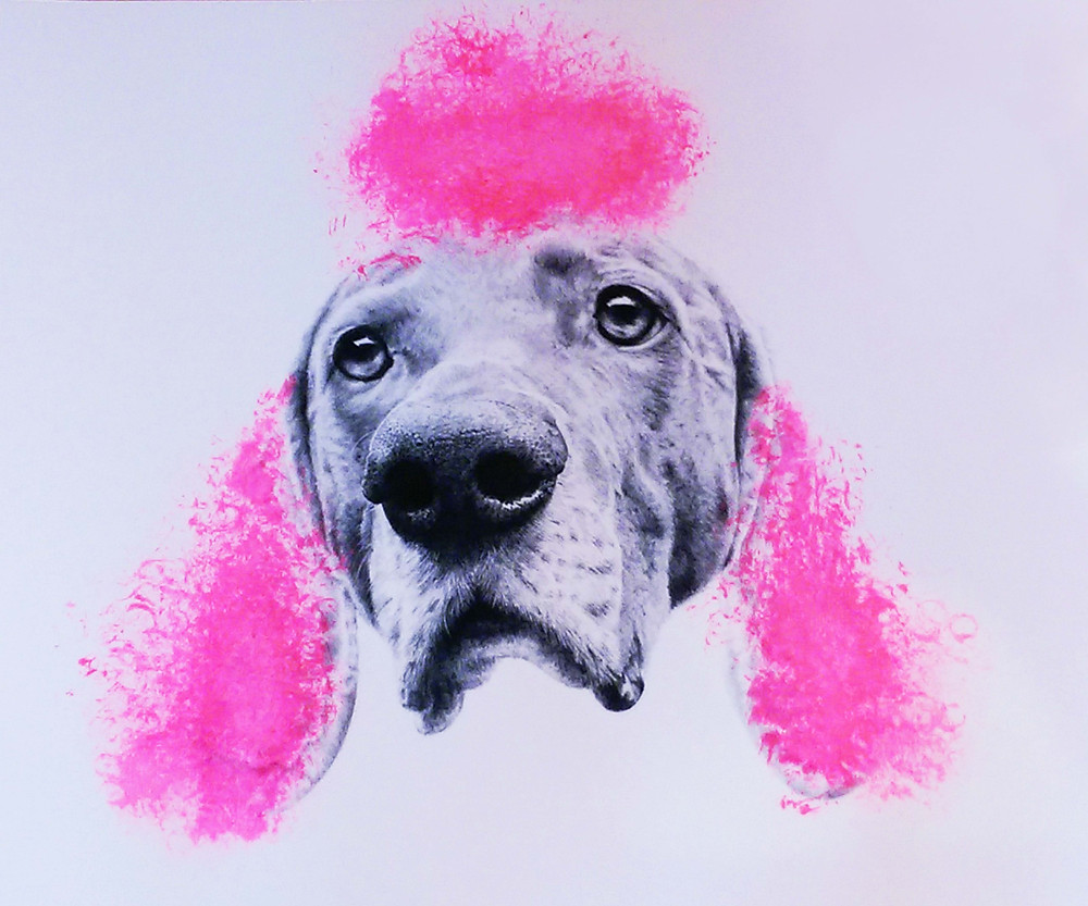 Pussy-print-poodle (Candy)