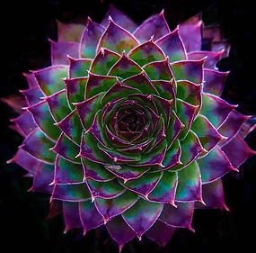 Add WEBSITE - Purple Succulent.jpg