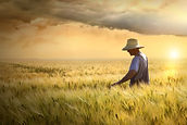 photodune-694358-farmer-checking-his-cro
