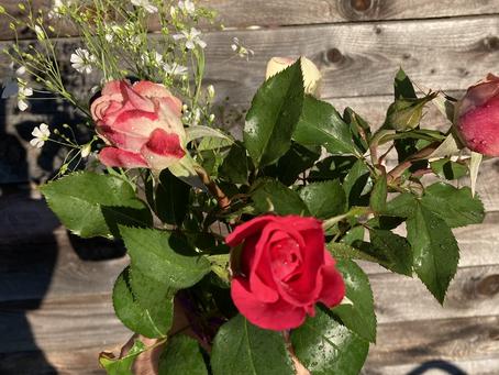 Beautiful hybrid tea roses