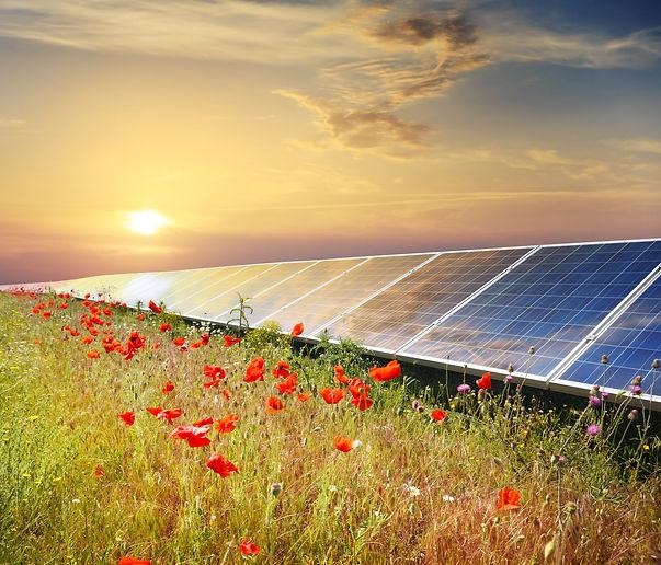 Solar utility scate project pollinator habitat virginia energix