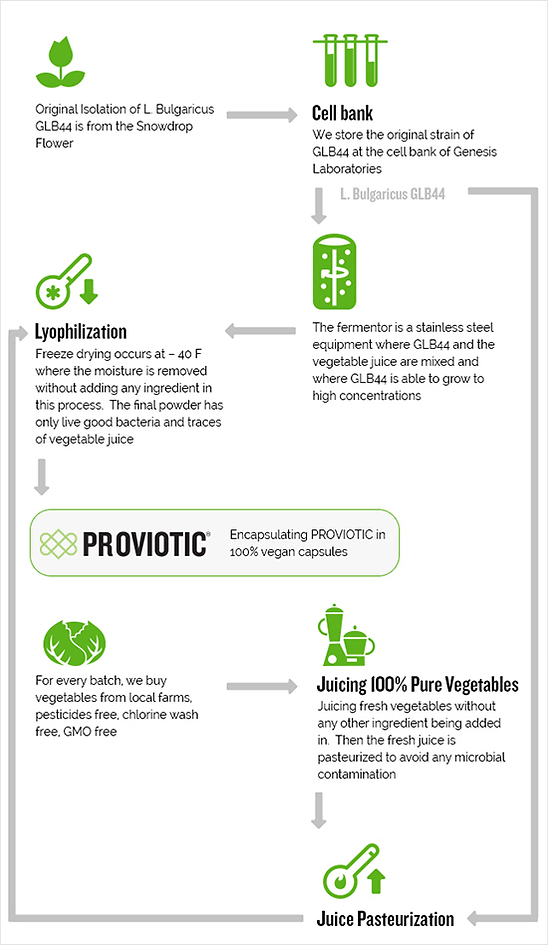 our game changing probiotic is 100 vegan and organic with its simple and transperant production process. L.Bulgaricus GLB44 - isolated from the snowdrop flower, grown in a fresh GMO free juice and than dry freeze