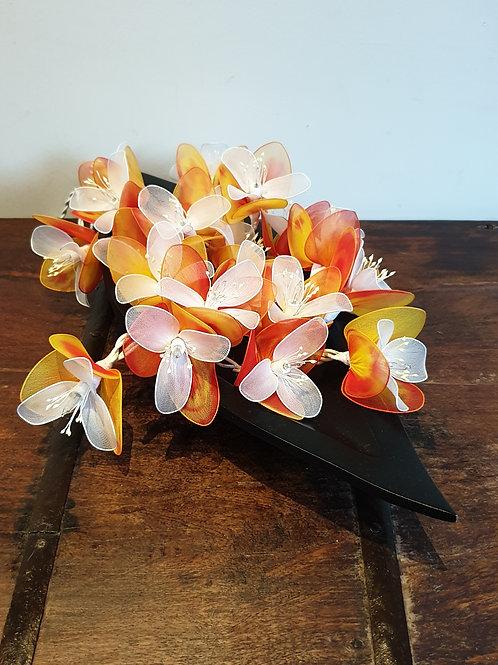 Orchidées Oranges