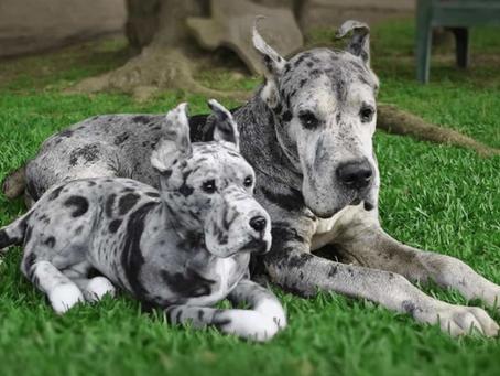 Amazing Pet Clones