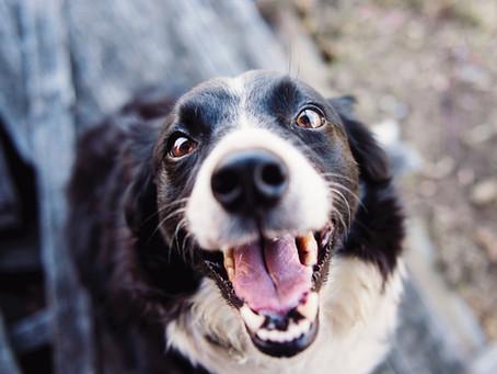 Barking Dog Complaints