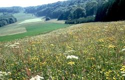 prairies-en-fleurs-aux-mercureaux.xl