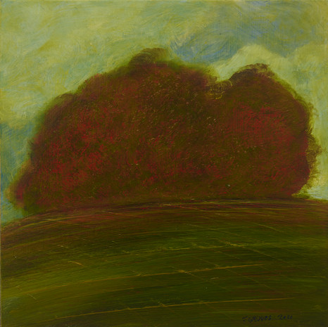 Copper Beeches On The Hill