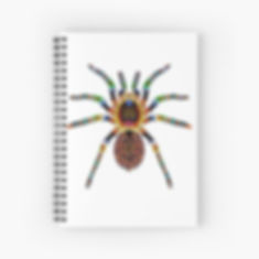 A spide image on a spiral note book. Graphic designs for insect lovers.