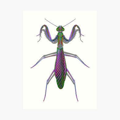 A praying mantis print for the walls.