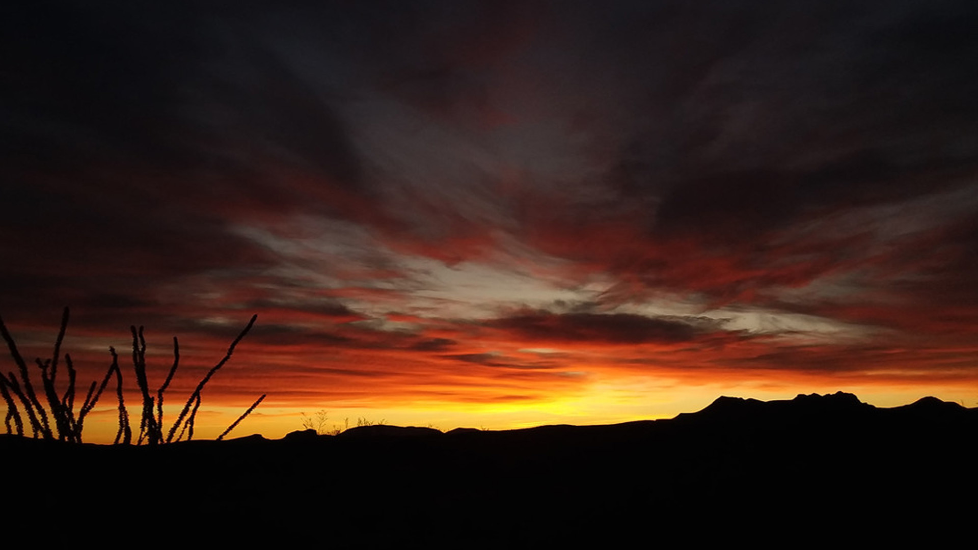 Javelina Sunrise