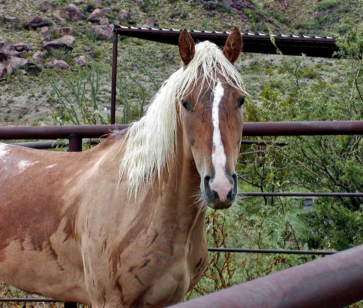 LHR-Horse.jpg