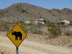 LHR-Elephant-Xing.jpg