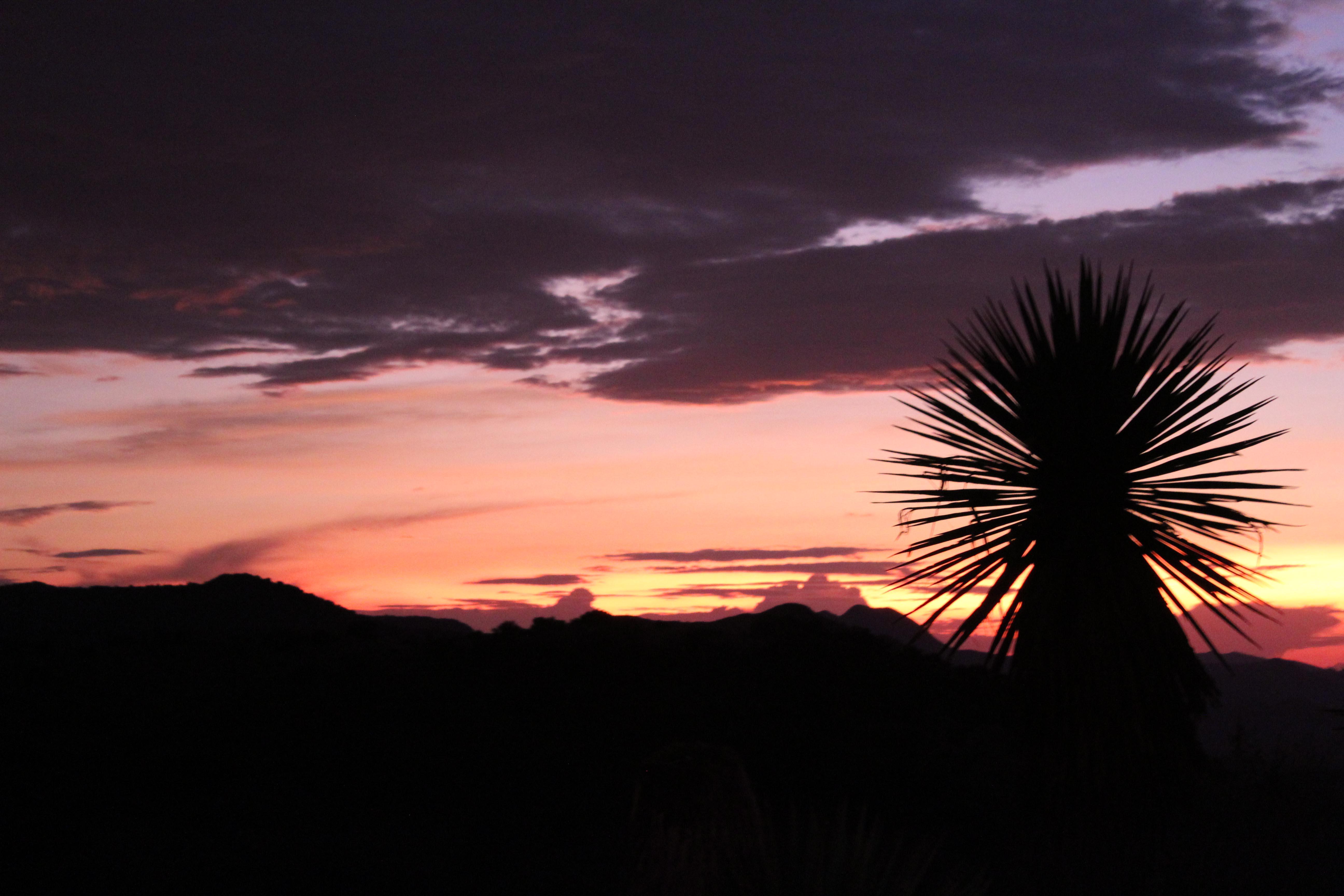 Sunrise Yucca