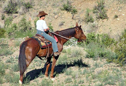 LHR-Horse-Chelesea.jpg