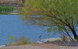 AR - Rio Pond with Heron 1