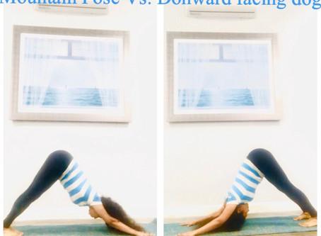 Mountain Pose vs. Downward facing dog Pose