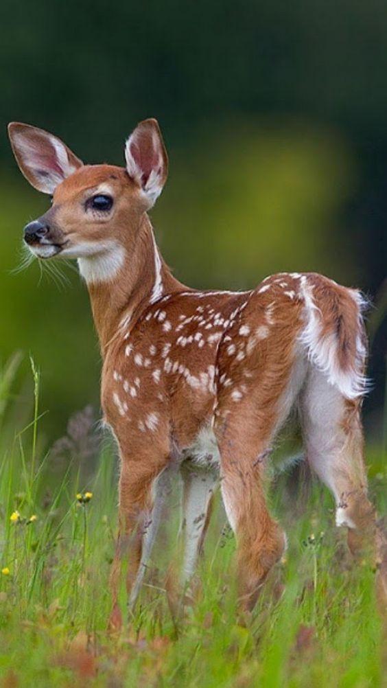 deerbaby spotted near shaala.jpg