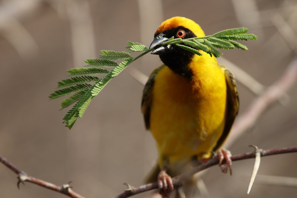 bird-4681934.jpg