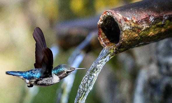 hummingbird-5943549.jpg