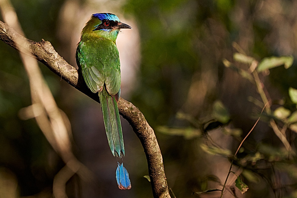 bird-5539596.jpg