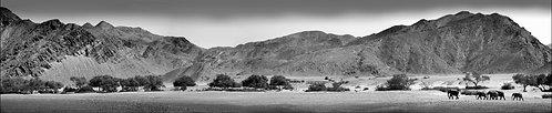 Desert Elephants, Hoanib Valley, Kaokoland, Namibia