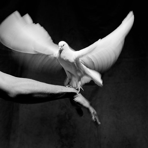 Romeo+Dove