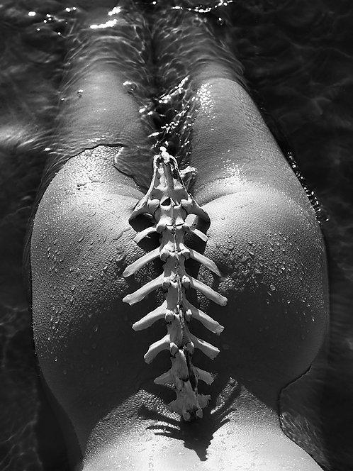 Antelope Spine