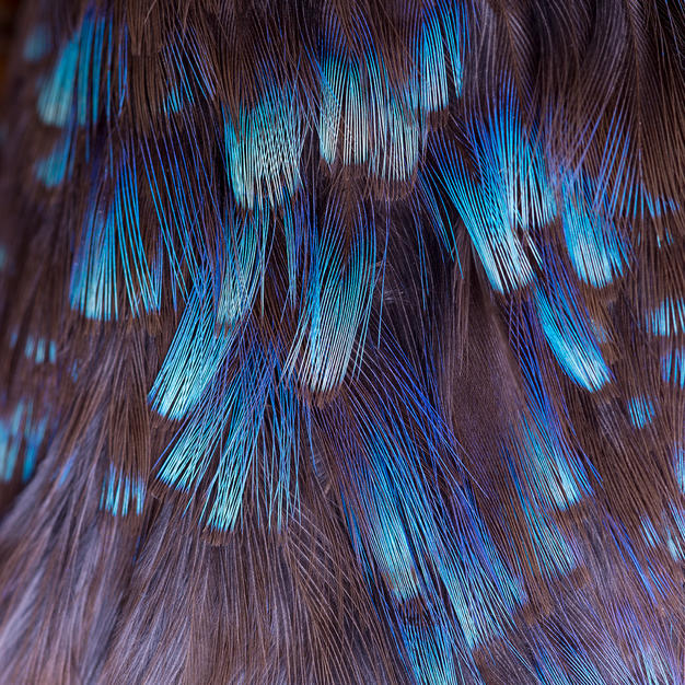malachite kingfisher_2.jpg