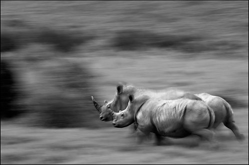 Rhino Blur