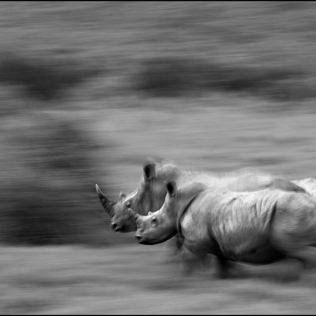 rhino blur_B&W_a_LOWRES.jpg