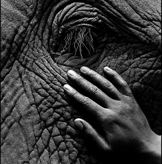 Elephant_eye_LR.jpg