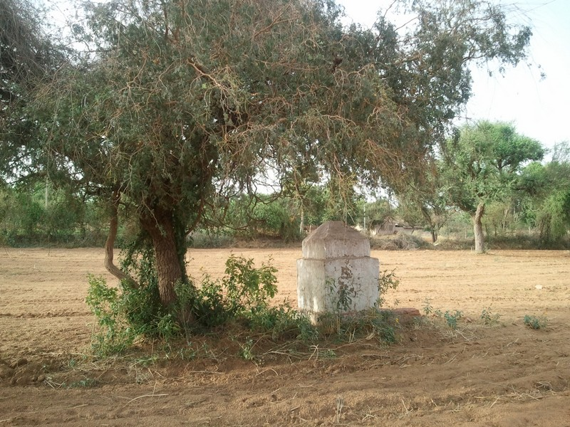 Rajasthan19