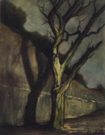 L'arbre insolite