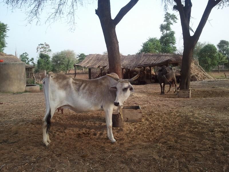 Rajasthan016