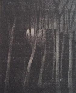 Les arbres nus