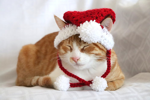 Santa Hat for Cats