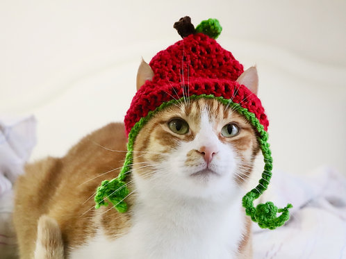 Apple Hats for Cats
