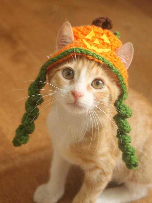 Jack-o-Lantern Hats for Cats