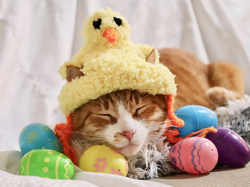Easter Chick Hat for Cats